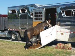 Horse Transportation, Horse shipping boots