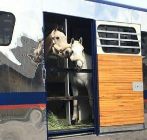 Equine Transport, Horse Transportation